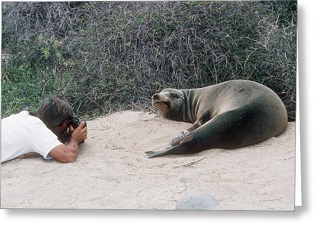 Californian Sea Lion With A Tourist Greeting Card by Georgette Douwma
