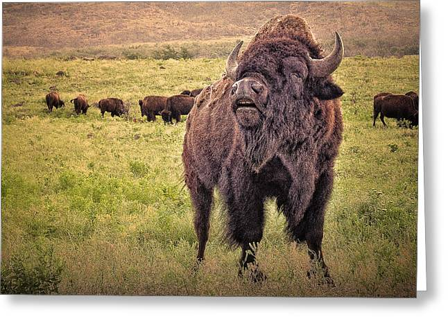 Call of the Bison Greeting Card by Tamyra Ayles