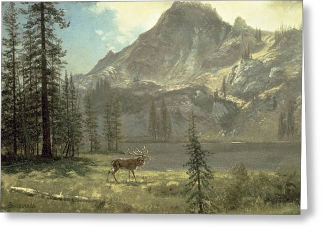 Bierstadt Greeting Cards - Call of the Wild Greeting Card by Albert Bierstadt