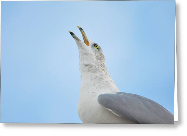 Flying Seagull Digital Art Greeting Cards - Call of the Wild Greeting Card by Bill Cannon