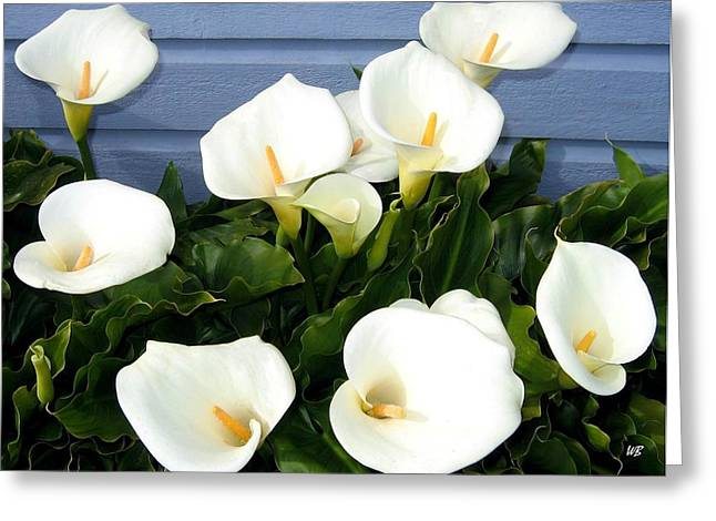 Calla Lily Greeting Cards - Calla Lilies- Oregon Greeting Card by Will Borden