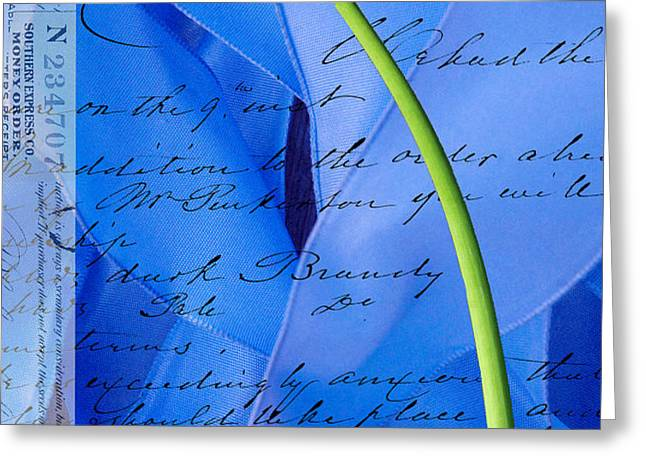 Calla Lilly on Blue Ribbon Love Letter Greeting Card by Anahi DeCanio