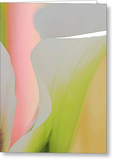 Apricot Greeting Cards - Calla Lily 1 Greeting Card by Carolyn Dalessandro