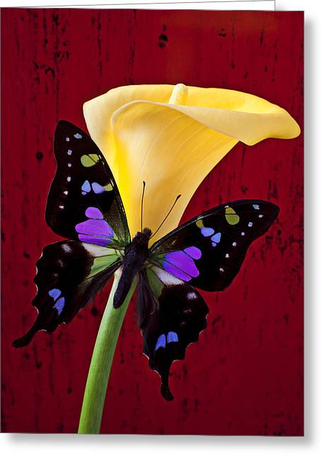 Aethiopica Greeting Cards - Calla lily and purple black butterfly Greeting Card by Garry Gay