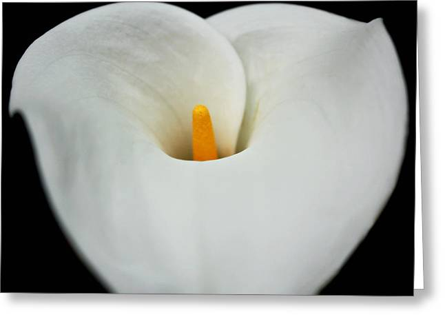 Calla Lily Greeting Cards - Calla Lily Greeting Card by Cathie Tyler