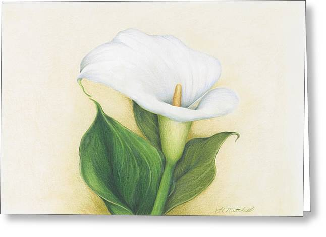 Calla Lily Drawings Greeting Cards - Calla Lily Greeting Card by Heather Mitchell