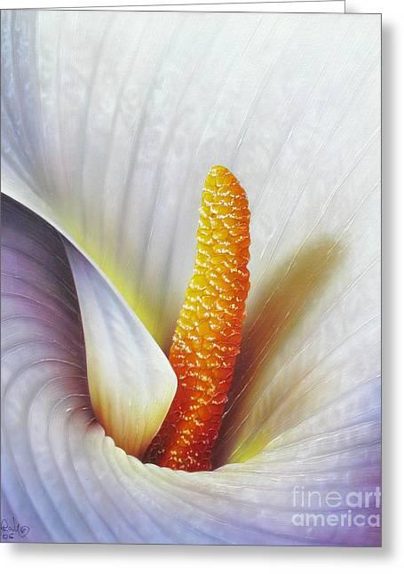 Calla Lily Greeting Cards - Calla lily Greeting Card by Jurek Zamoyski