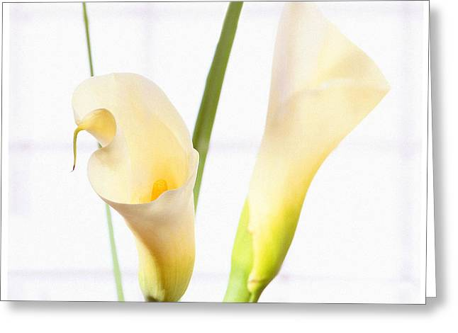 Calla Lily Greeting Card by Mike McGlothlen