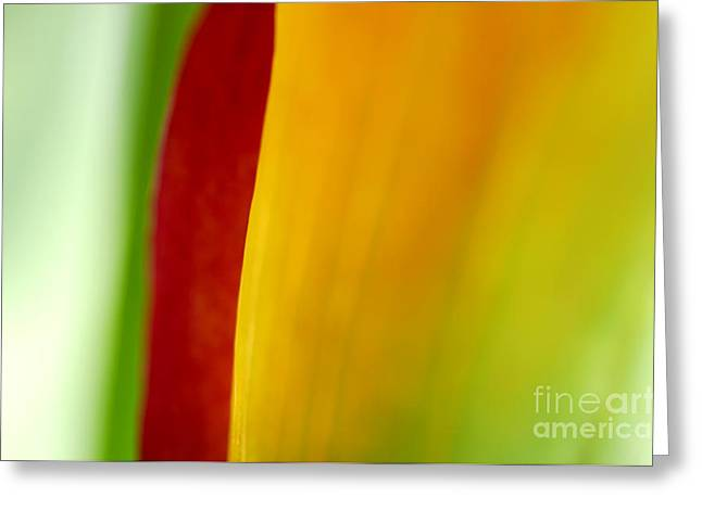 Flowering Greeting Cards - Calla Lily Greeting Card by Silke Magino