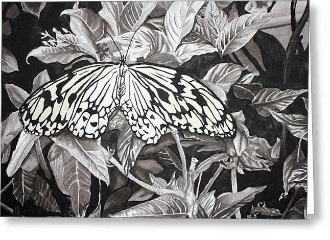 Muted Drawings Greeting Cards - Callaway Paper Kite Butterfly Greeting Card by Beth Parrish