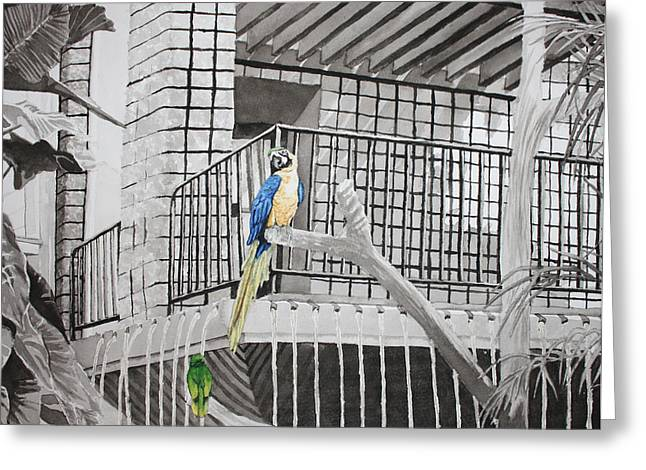 Muted Drawings Greeting Cards - Callaway Yellow Headed Amazon Parrot and Blue and Gold McCaw Greeting Card by Beth Parrish
