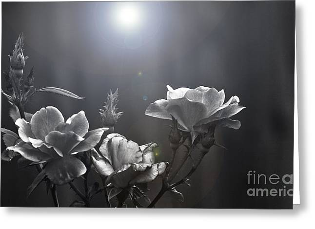 Kim Henderson Greeting Cards - Called Upon Greeting Card by Kim Henderson