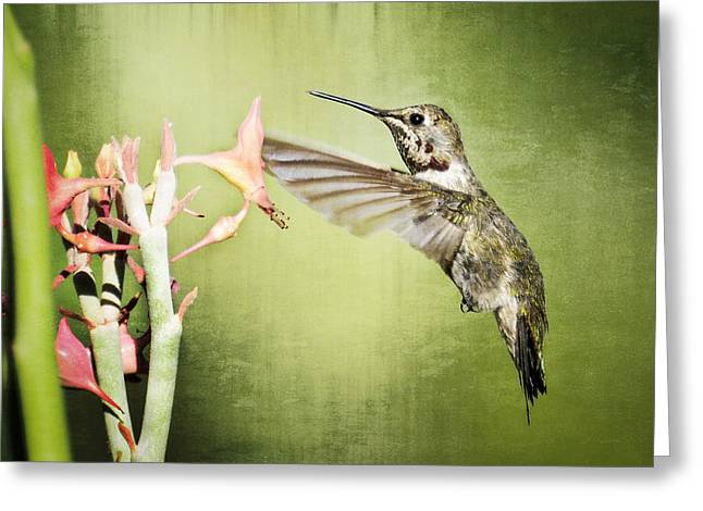 Calliopes Greeting Cards - Calliope Hummingbird  Greeting Card by Saija  Lehtonen