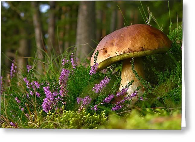 Purple Mushrooms Digital Greeting Cards - Calluna vulgaris known as Common Heather ling or simply heather and big edible mushroom cep Greeting Card by Marek Mierzejewski
