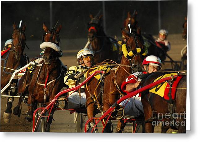 Harness Racing Greeting Cards - Calm Cool Collected Greeting Card by Bob Christopher