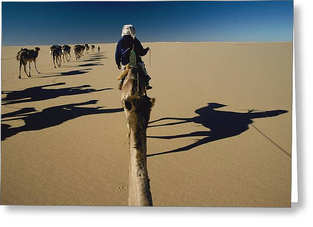 Sahara Sunlight Greeting Cards - Camel Caravan And Their Shadows Greeting Card by Carsten Peter