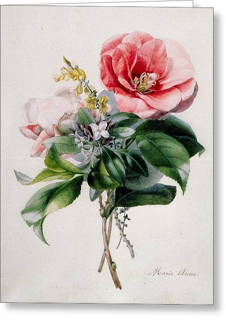 Tasteful Greeting Cards - Camellia and Broom Greeting Card by Marie-Anne