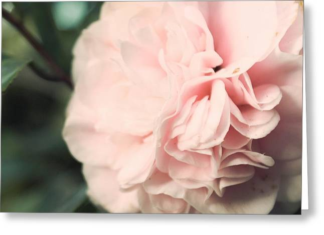 Ruffled Petals Greeting Cards - Camellia Greeting Card by Cindy Garber Iverson