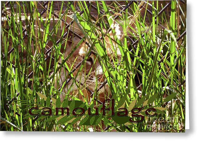 Bobcats Digital Art Greeting Cards - Camouflage Greeting Card by Methune Hively