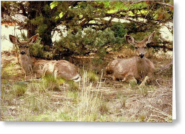 Camouflaged Greeting Card by Cindy Wright