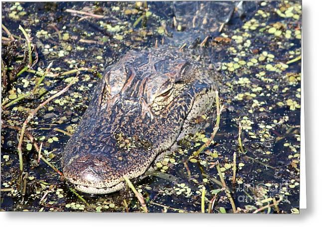 Camouflaged Gator Greeting Card by Carol Groenen