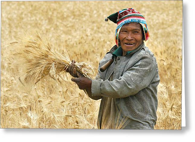 Indigenous Greeting Cards - campesino cutting wheat. Republic of Bolivia. Greeting Card by Eric Bauer