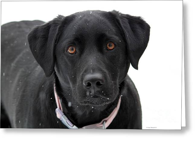 Dogs In Snow. Greeting Cards - Can I Come In Greeting Card by Cathy  Beharriell