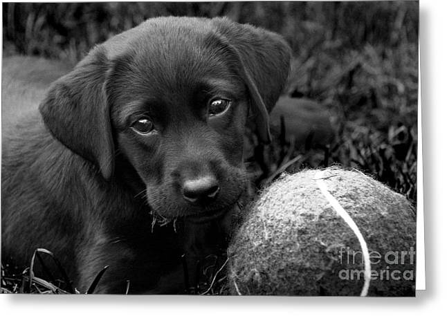 Puppies Photographs Greeting Cards - Can We Play  Greeting Card by Cathy  Beharriell