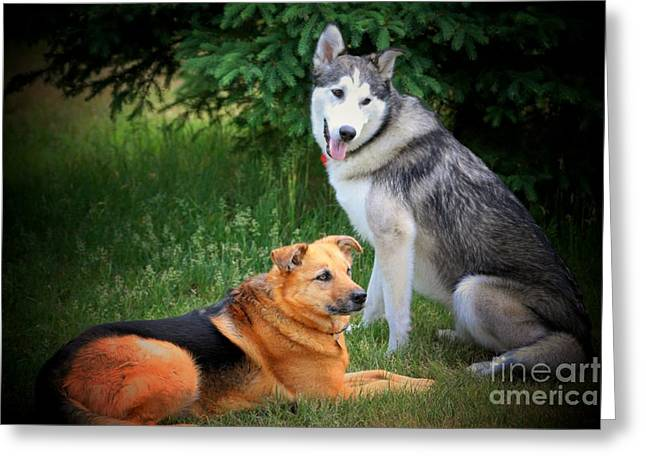 Husky Digital Art Greeting Cards - Can we play now Greeting Card by Marjorie Imbeau