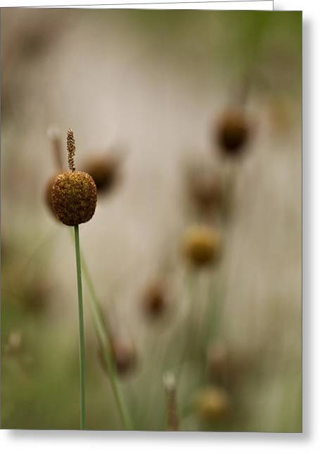 Cattails Greeting Cards - Can You Hear Me Now Greeting Card by Rebecca Cozart