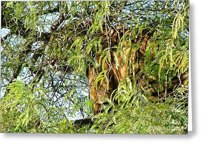 Tiger Photographs Greeting Cards - Can you see me........ Greeting Card by Nick Gustafson