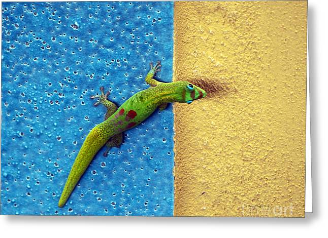Gecko Print Greeting Cards - Can You See Me Now Greeting Card by Patricia Griffin Brett