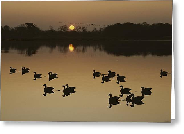 Wood Carving Greeting Cards - Canada Geese And Decoys Silhouetted Greeting Card by Kenneth Garrett