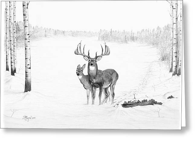Birch Tree Drawings Greeting Cards - Canadian Dream Greeting Card by Steve Maynard