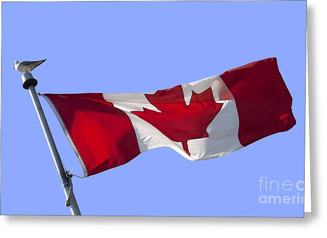 National Symbol Greeting Cards - Canadian flag Greeting Card by Blink Images