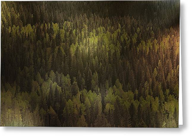Canadian Forest - The woods are lovely dark and deep Greeting Card by Christine Till