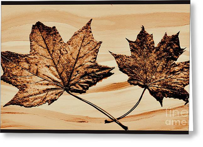Brown Tones Greeting Cards - Canadian Leaf Greeting Card by Marsha Heiken