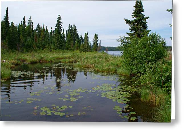 Canadian Wilderness Greeting Cards - Canadian Shield Greeting Card by Joanne Smoley