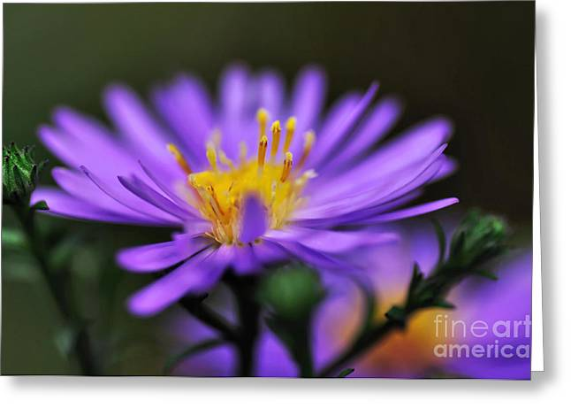 Daisy Bud Greeting Cards - Candles on a Daisy Greeting Card by Kaye Menner