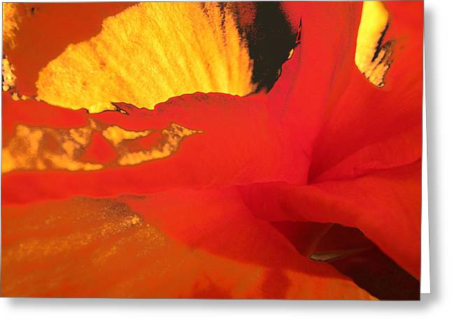 Canna Deny Greeting Card by Lora Fisher