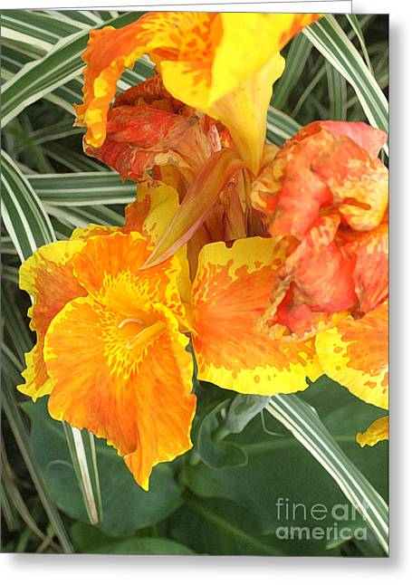 Canna Lily Greeting Cards - Canna Lilies Greeting Card by David Bearden