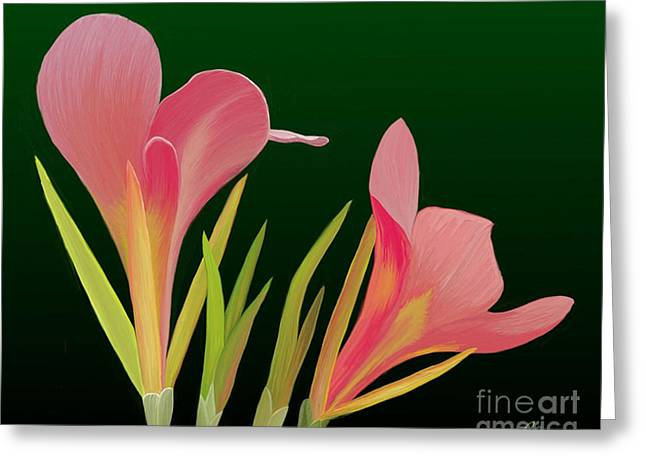 Canna Lilly Whimsy Greeting Card by Rand Herron