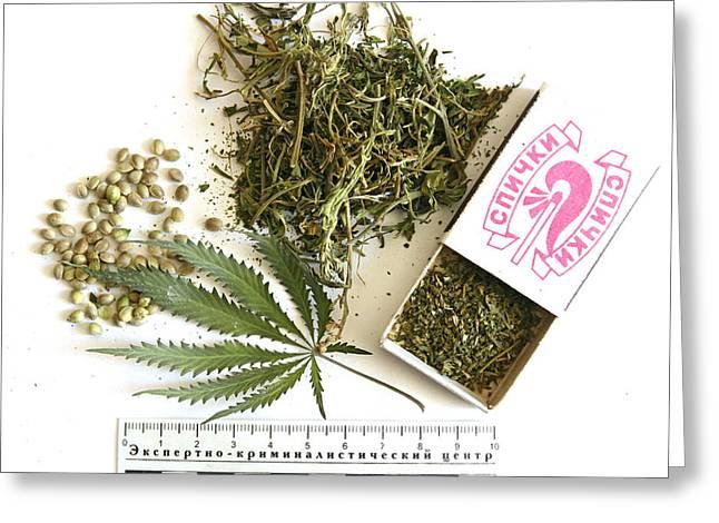 Marijuana Photographs Greeting Cards - Cannabis Products Greeting Card by Ria Novosti