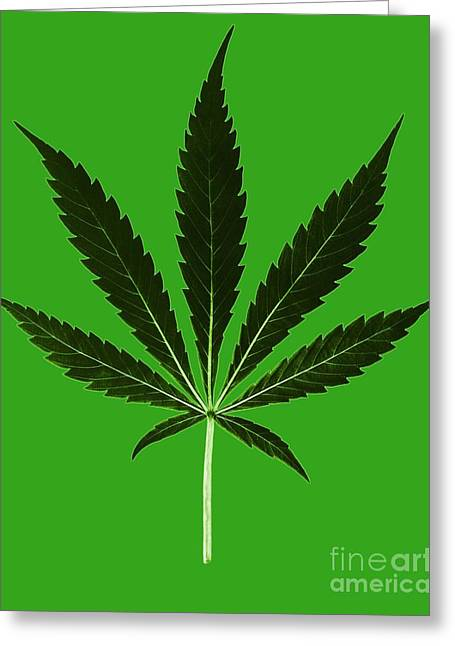Medicinal Plant Greeting Cards - Cannabis Sativa, Marijuana Leaf Greeting Card by Science Source