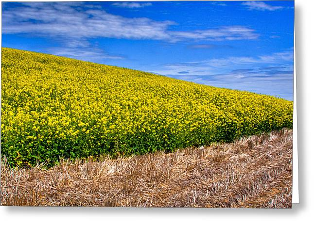 Lanscape Greeting Cards - Canola and Stubble Greeting Card by David Patterson