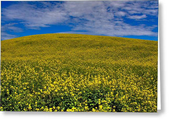 David Patterson Greeting Cards - Canola Field in the Palouse Greeting Card by David Patterson
