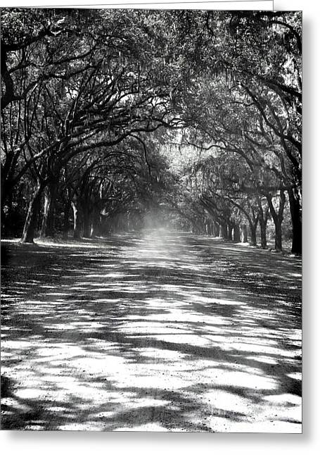 Gravel Road Greeting Cards - Canopy Greeting Card by Jessica Smith