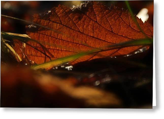 Ground Level Photographs Greeting Cards - Canopy Greeting Card by Odd Jeppesen