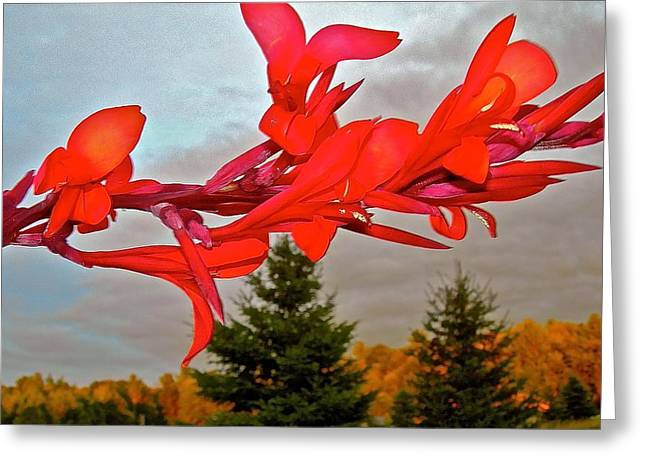 Canopy Of Color Greeting Card by Randy Rosenberger