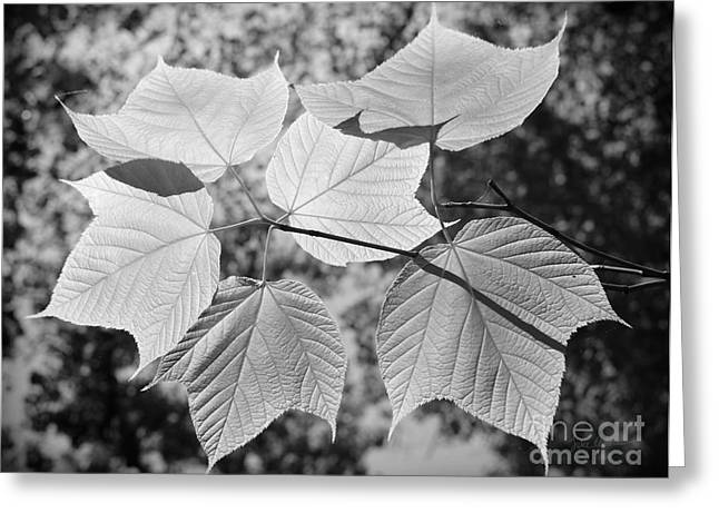 Spiderweb Art Greeting Cards - Canopy of Leaves Greeting Card by Luke Moore